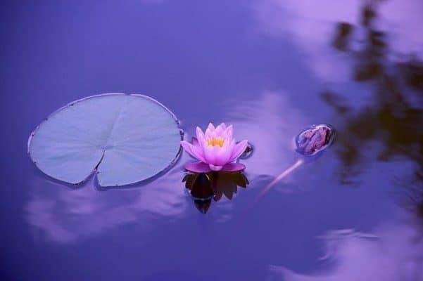 meditation olfactive à Lambesc